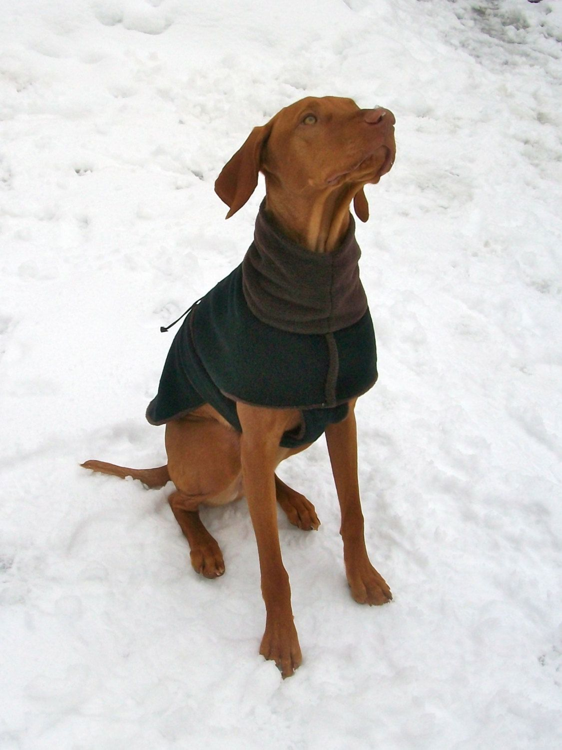 Black Fleece dog coat, dog vest for 40-50lb vizsla, small greyhound ...