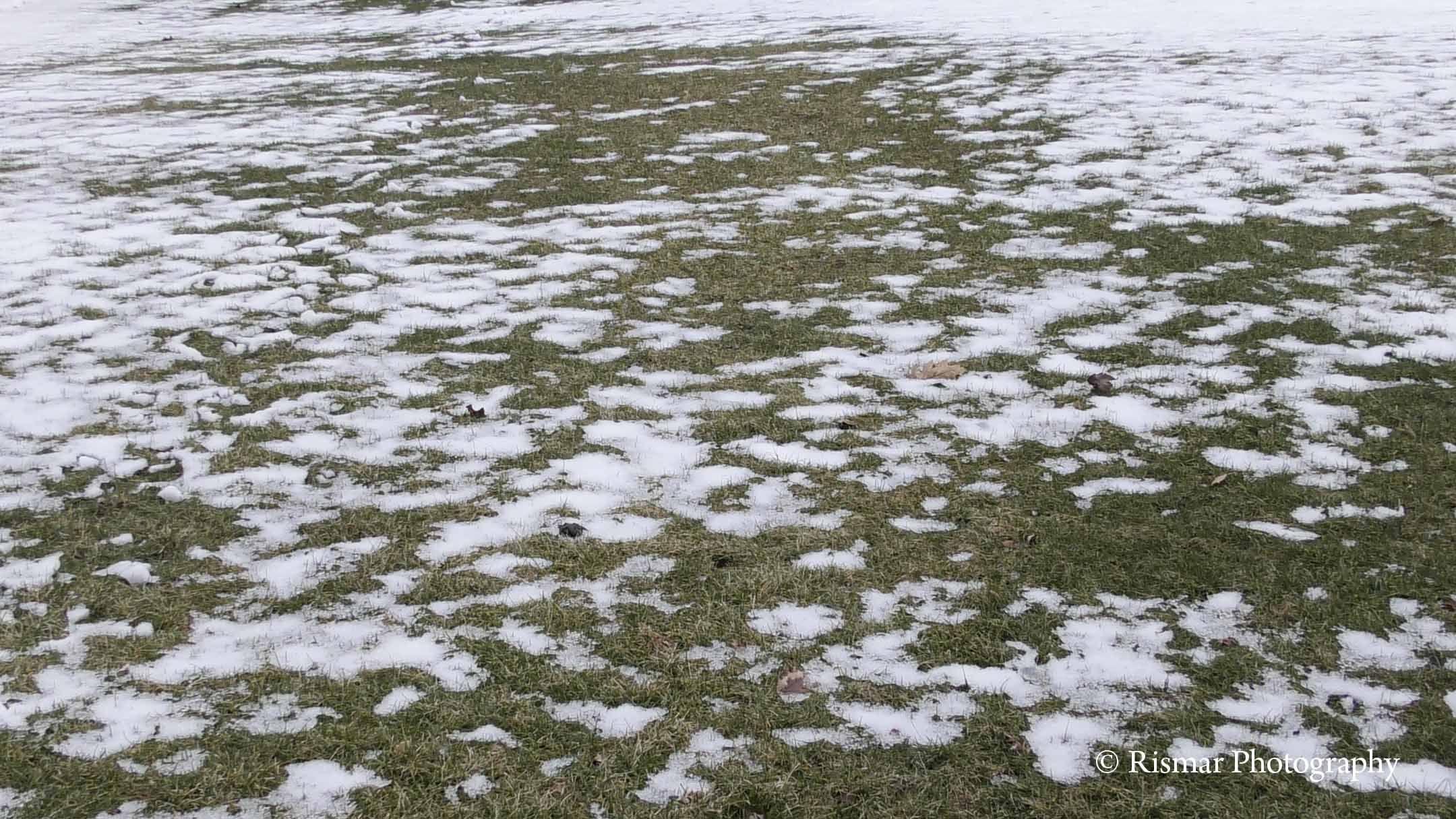 Bildresultat för snow on grass