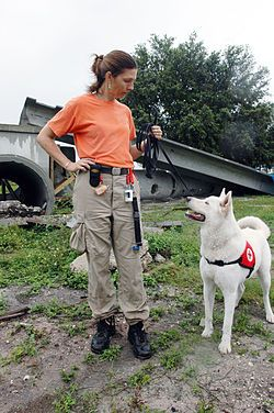 Training The Search And Rescue Dog Wikibooks Open Books For An