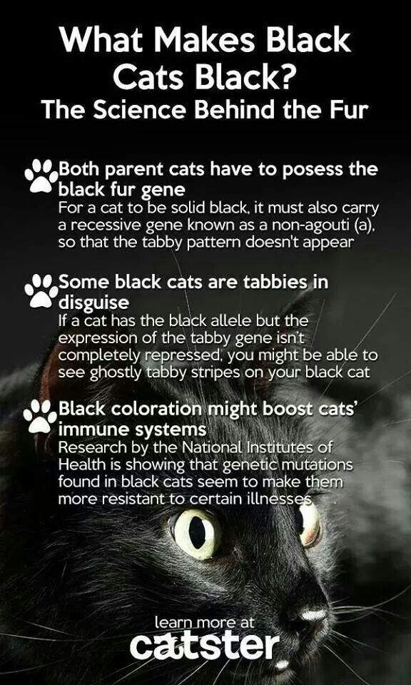 Why Black Cats Are Black Black Cat Appreciation Day Black Cat Cat Facts
