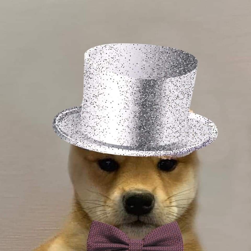 Pin By Serena On Dog Wif Hat In 2020 Cute Animals Dogs Shiba Inu