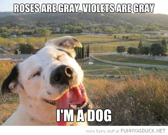 Bad Day Meme Funny : Probably laughed harder than i should have bad day just look