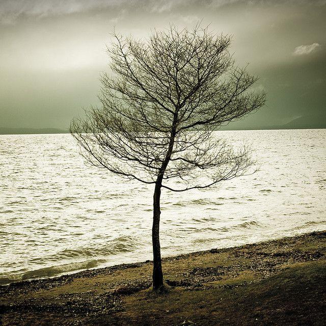 tree Lake water, Nature wallpaper, Lone tree