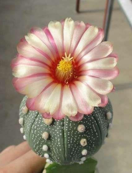 Plants Indoor Cactus Inspiration 41 Ideas -   15 indoor plants Tattoo ideas