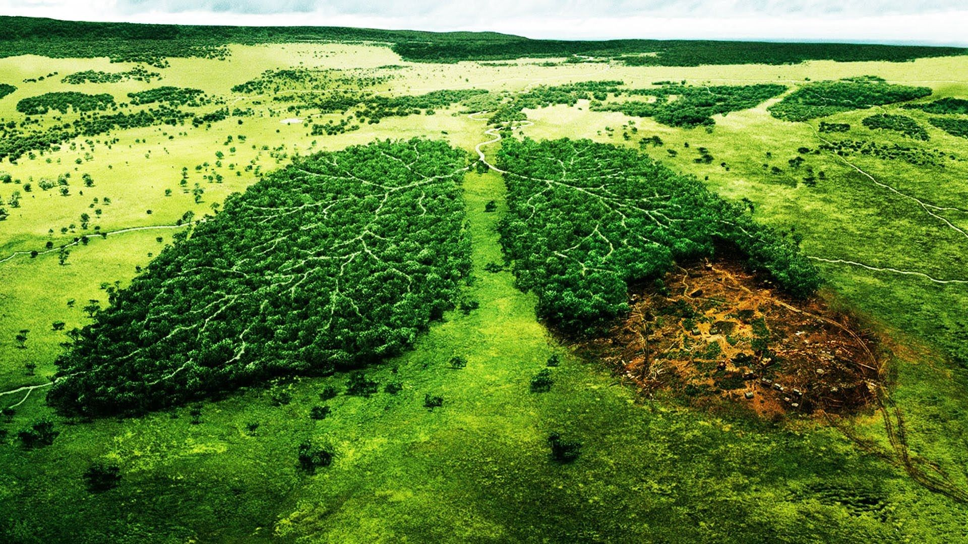 Image Result For Save Environment Pictures Hd Creative Advertising Advertising Nature