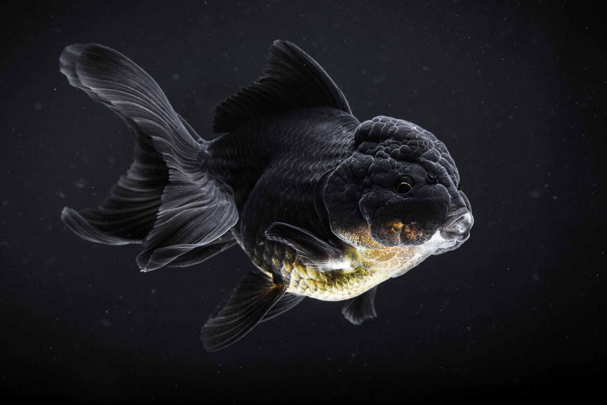 Pin By Raven Coenen On Animals In 2020 Rare Fish Ocean Animals Animals