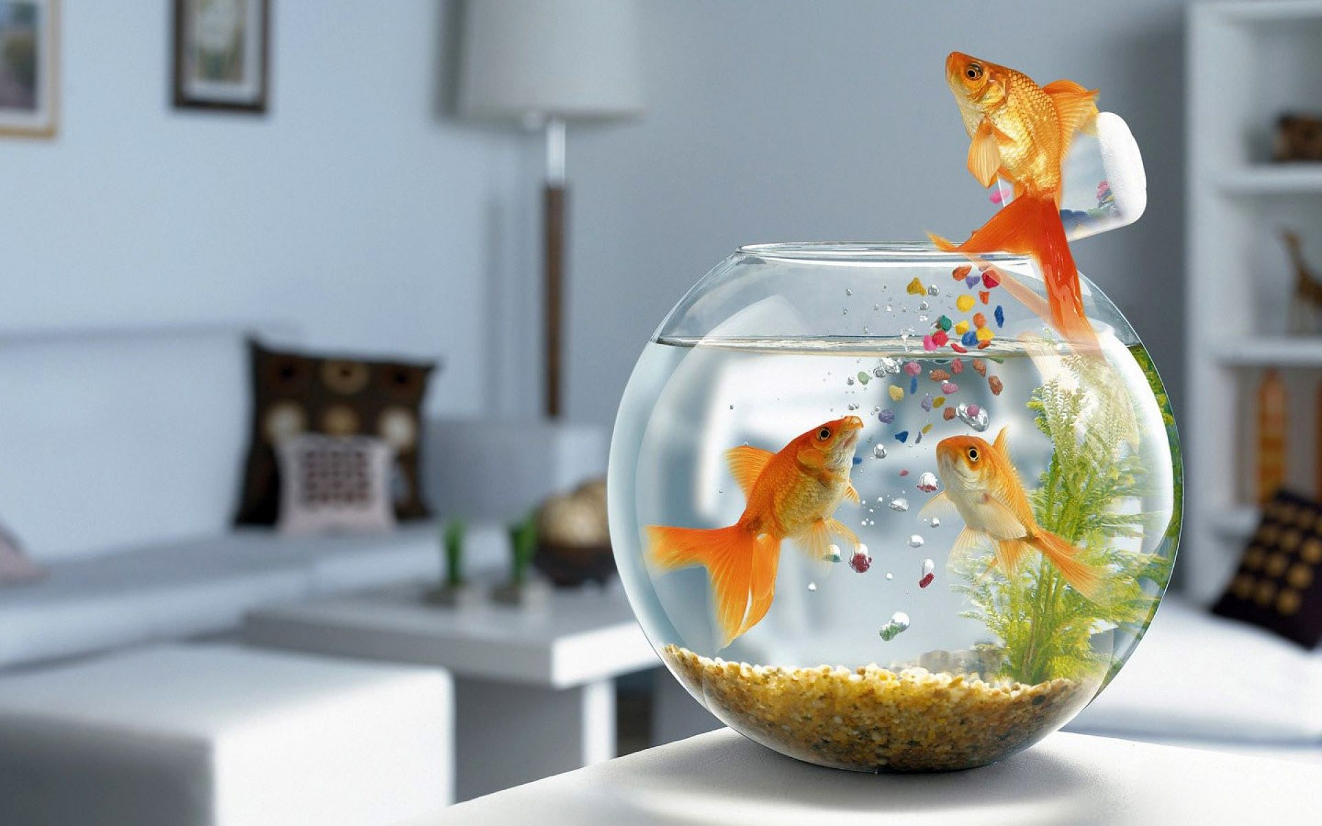 Humor  Goldfish Wallpaper
