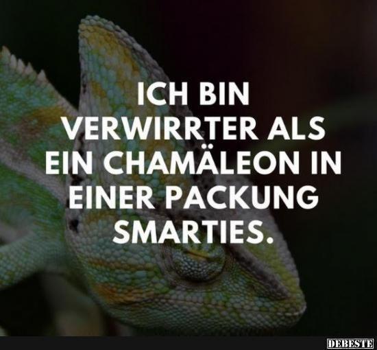 sprüche verwirrt Ich bin verwirrter als ein Chamäleon in einer Packung Smarties  sprüche verwirrt