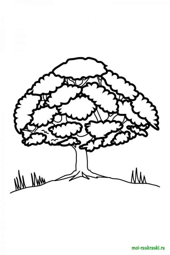 Verfärben von Bäumen. Herunterladen und ausdrucken Malvorlagen Bäume ...
