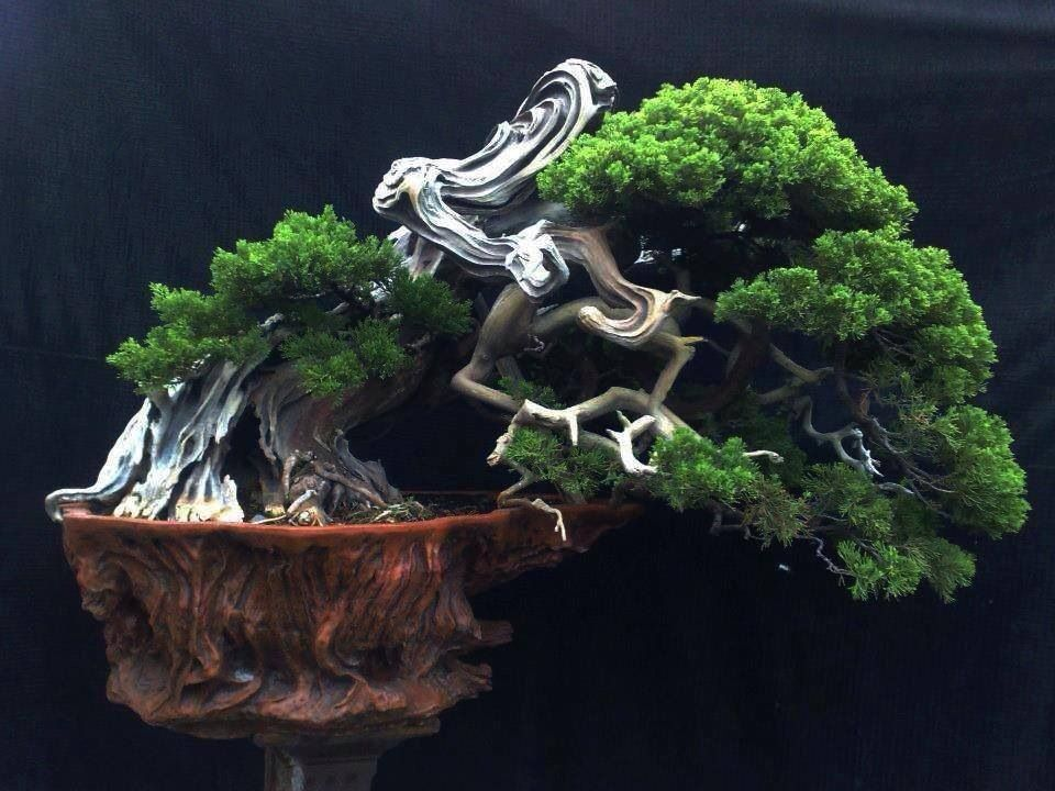 Juniper with Jin (deadwood technique). | Bonsai plants