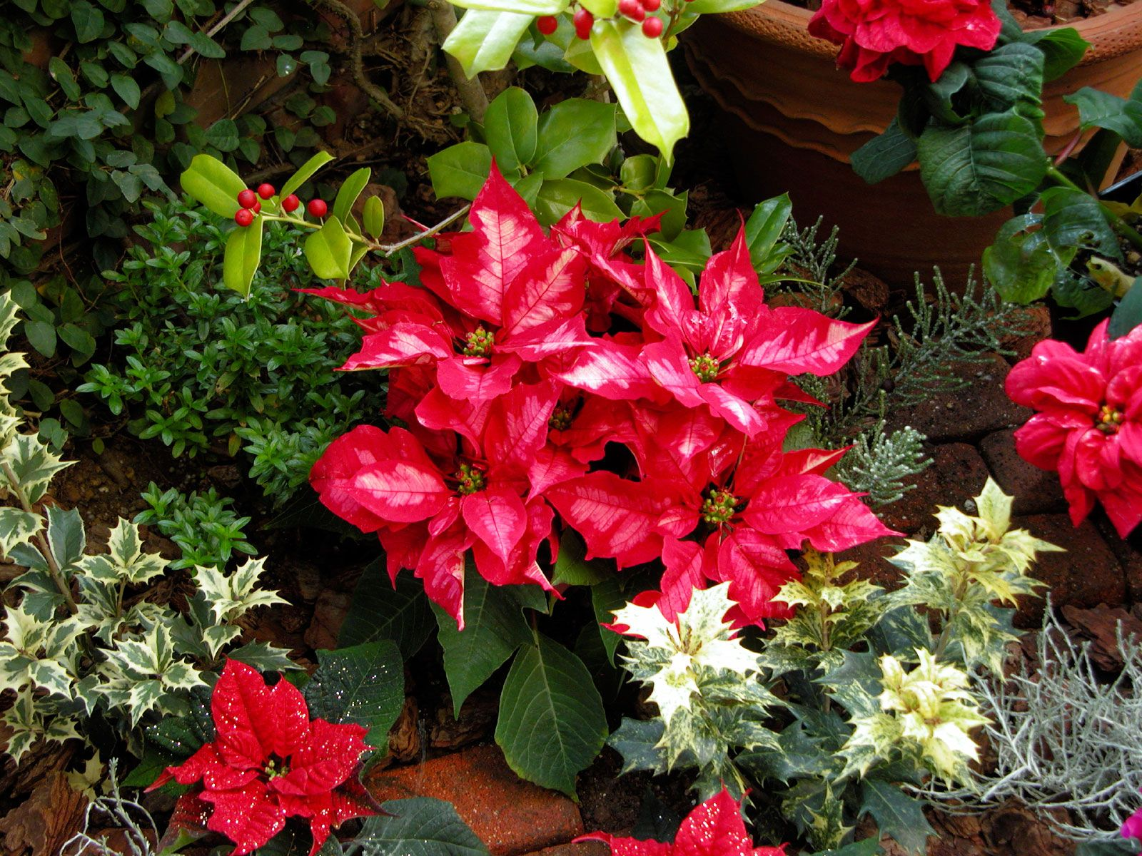 A List Of Plants And Flowers For Christmas Christmas