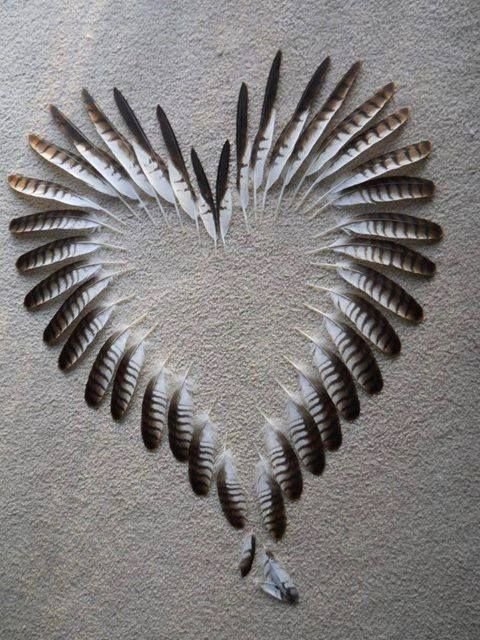 feather heart, love