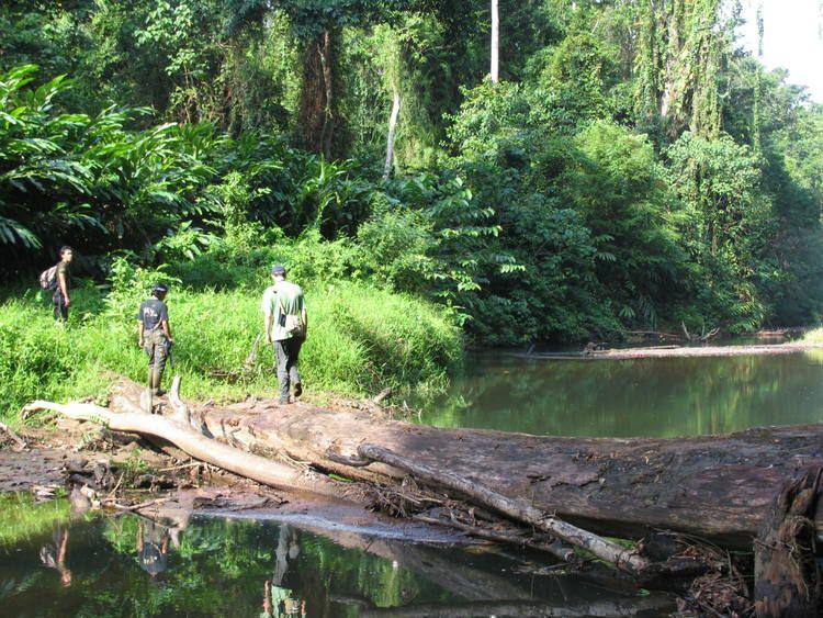 Tropical Rainforest Heritage of Sumatra World heritage
