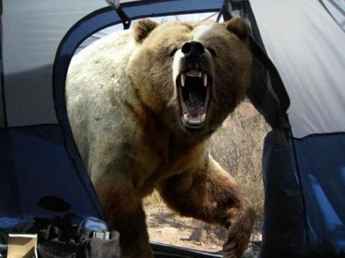 Was Photographer Michio Hoshino Killed By A Bear Bear Attack Camping Fun Bear