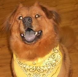 Adopted Louisiana Bernie Is A 4 6y O Adoptable Golden