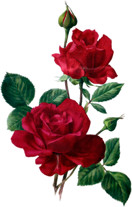 red roses flowers pinterest flores pinturas and desenhos