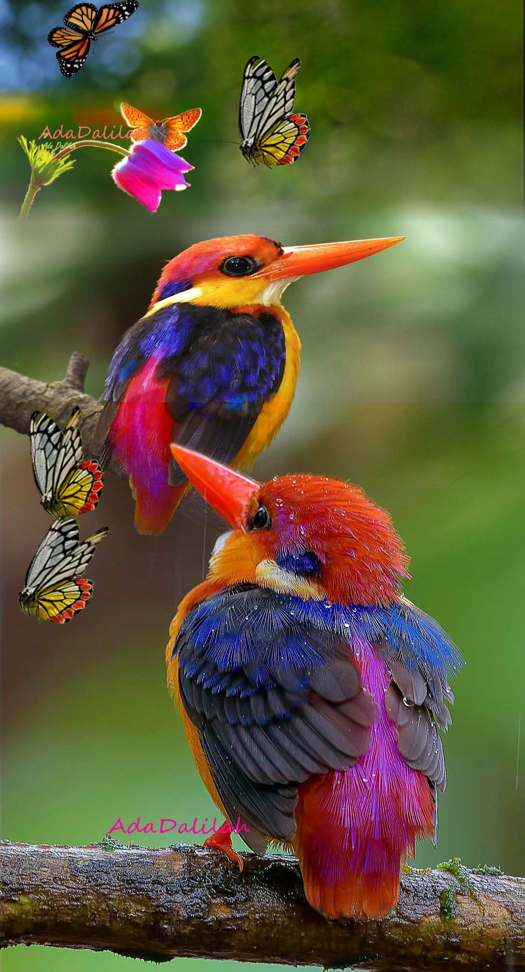 Pin By Aleemsamiul On Creative Clicks Beautiful Birds Birds Most Beautiful Birds