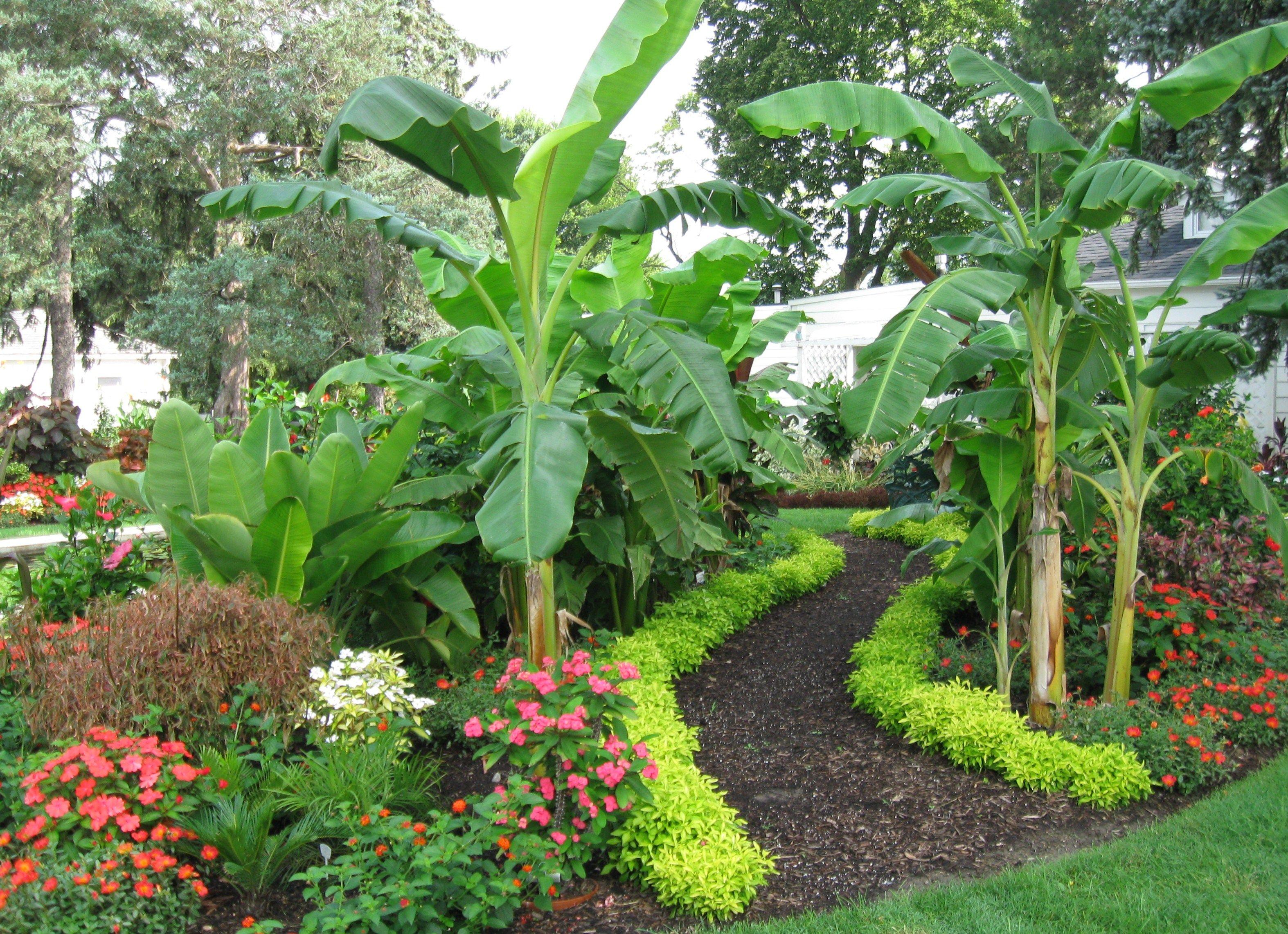 result tropical garden