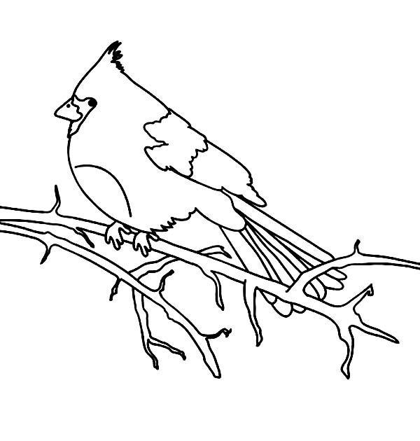 Cardinal Bird Cardinal Bird Stand On Dead Tree Branch Coloring