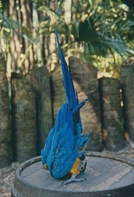 yoga parrot does salutation to the sun. wings tip to tip