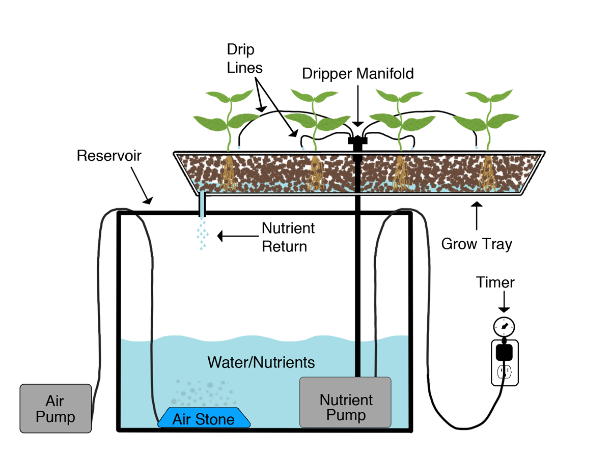Aquaponics gardening pinterest hydroponics for How to grow hydro in a fish tank