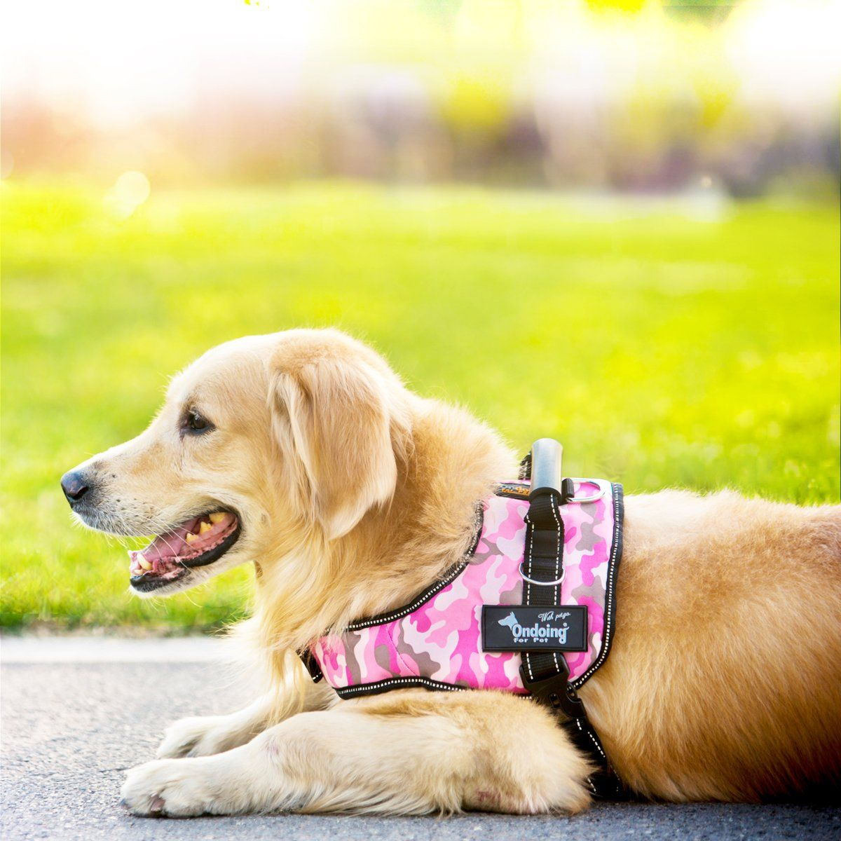 Ondoing Dog Harness Adjustable Pet Vest Harness No Pull Padded