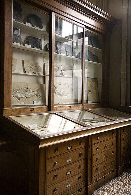 Fossil room book of memories interiors pinterest mobilier de salon meuble vitrine et for Cabinet de curiosite meuble