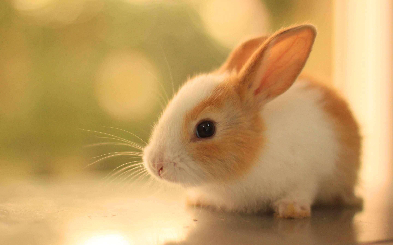 壁紙になりそうな画像を貼るスレ 動物の巻 Cute Kawaii Animals Rabbit Wallpaper Animals Beautiful