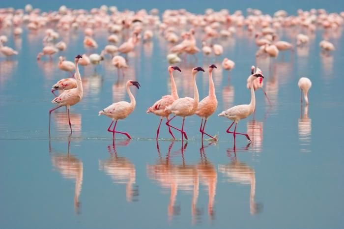 Dune blanche at Dakhla, Morocco | Dakhla, Flamand rose, Dunes blanches