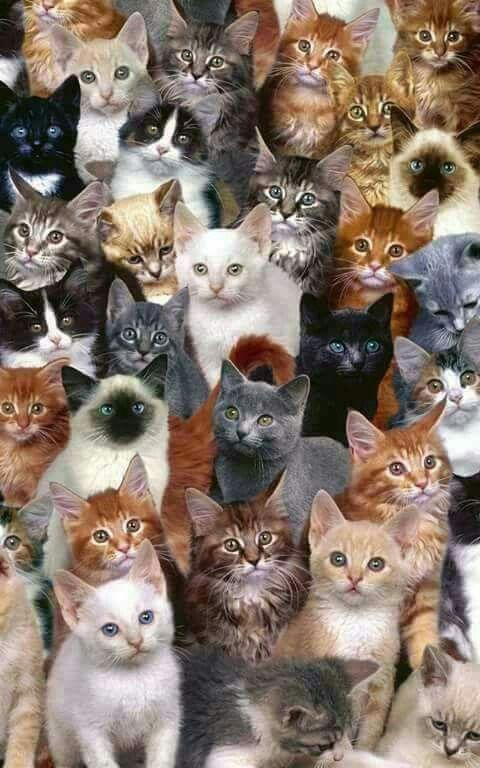 La Familia Es La Familia Por Siempre Gatos Gatinhos Adoraveis