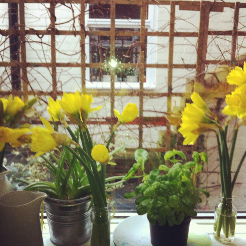 Spring time on my windowsill