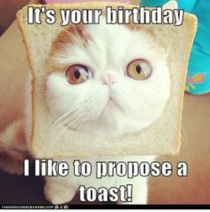 Cat Wishes A Happy Birthday And Also Offers A Toast Funny Happy