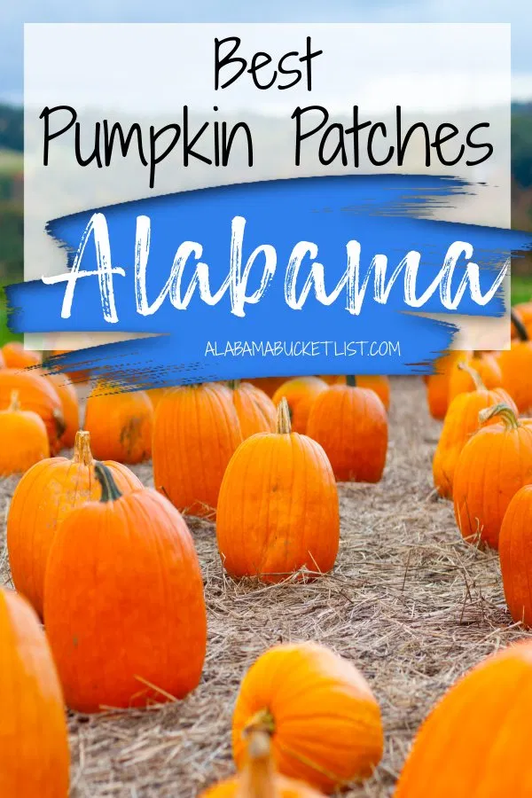 Best Pumpkin Patches In Alabama Alabama Bucket List In 2020 Travel Usa North America Travel Usa Travel Guide