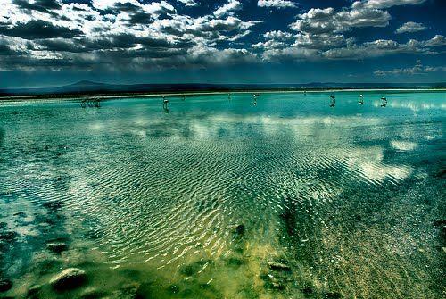 Laguna Chaxa, with flamingos.