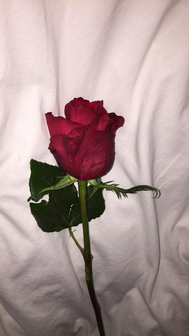 Deyanira Simón Rosentapete Tumblr Roses Und