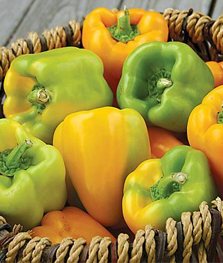 Sweet, Flavorburst Hybrid Pepper Seeds and Plants, Vegetable Gardening at Burpee.com