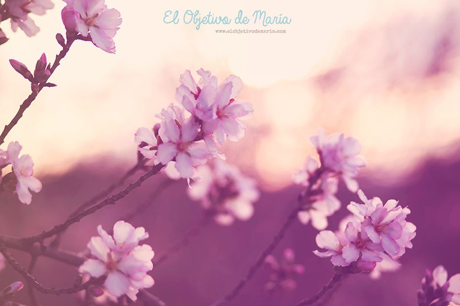 El objetivo de María: Postales de Invierno #2016