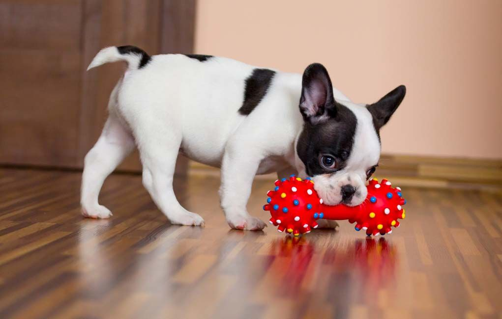 Interactive Dog Toys For Smart Dogs Fun Dog Gift Ideas Best