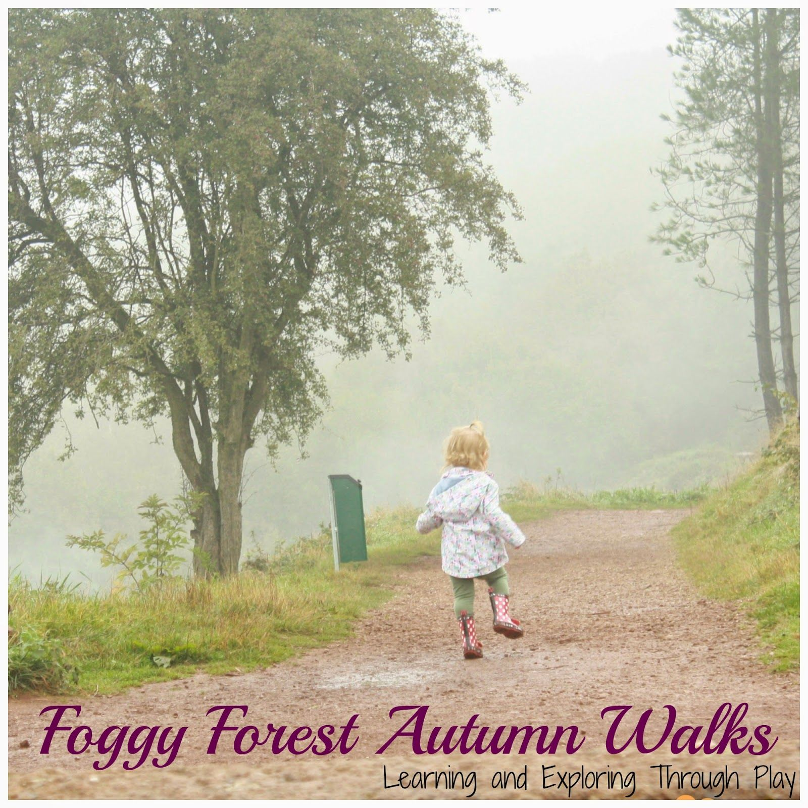Family Time - Foggy Forest Walk. Exploring and collecting Nature.
