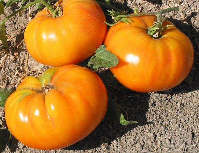 big rainbow organic heirloom tomato seeds pinterest. Black Bedroom Furniture Sets. Home Design Ideas