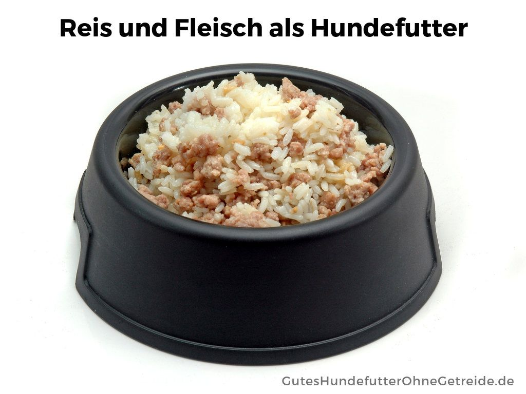Durfen Hunde Reis Essen Lebensmittel Essen Bestes Hundefutter Hunde Ernahrung
