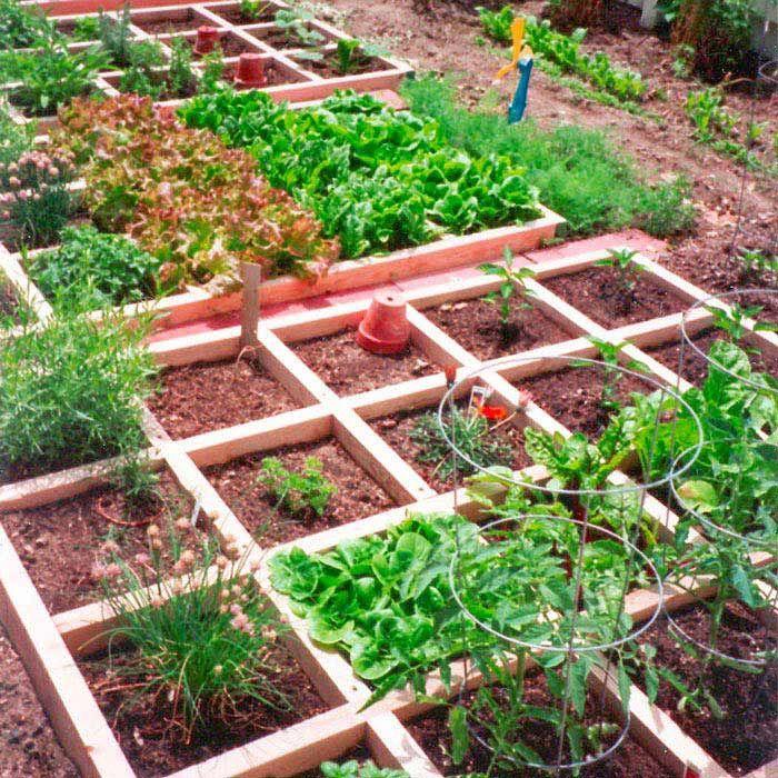 Potager Garden Blogs: Edible Landscaping: Square-Foot Kitchen Garden