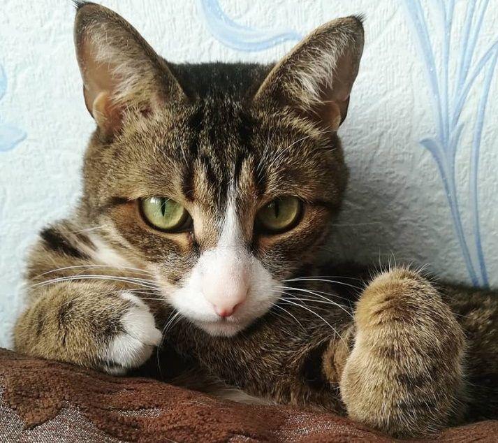 Top 100 Cat Pun Names Funny Cat Names Cat pun names