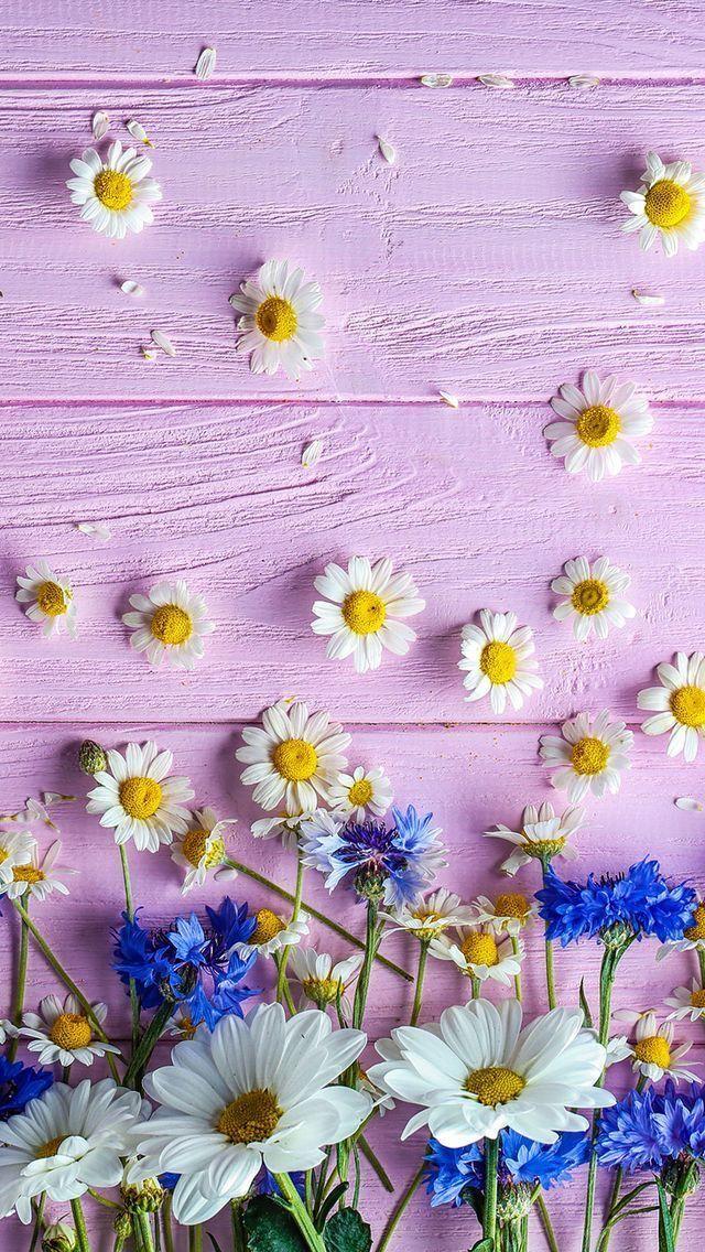 新着1位 春にピッタリな花の壁紙 スマホ壁紙 Iphone待受画像ギャラリー 花 壁紙 壁紙 春 花 イラスト