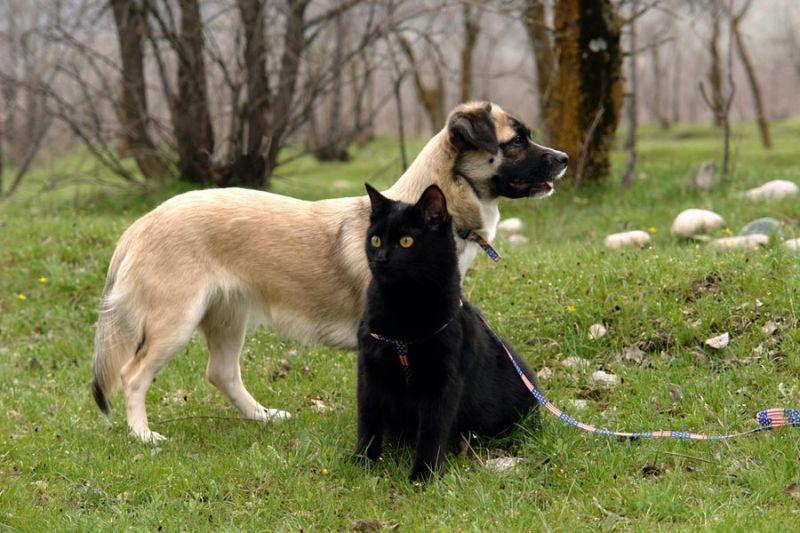 Картинки кошка с собакой с надписями, новым
