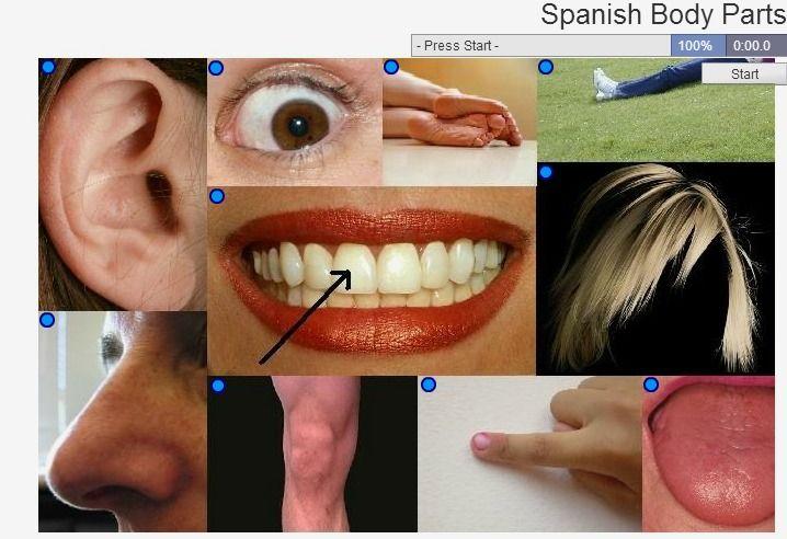 Quiz  Spanish Body Parts | El cuerpo | Body parts, Face