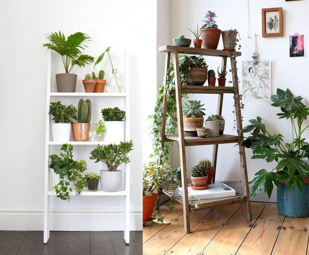 Como decorar cualquier habitacion con plantas de interior - Decoracion plantas interior ...