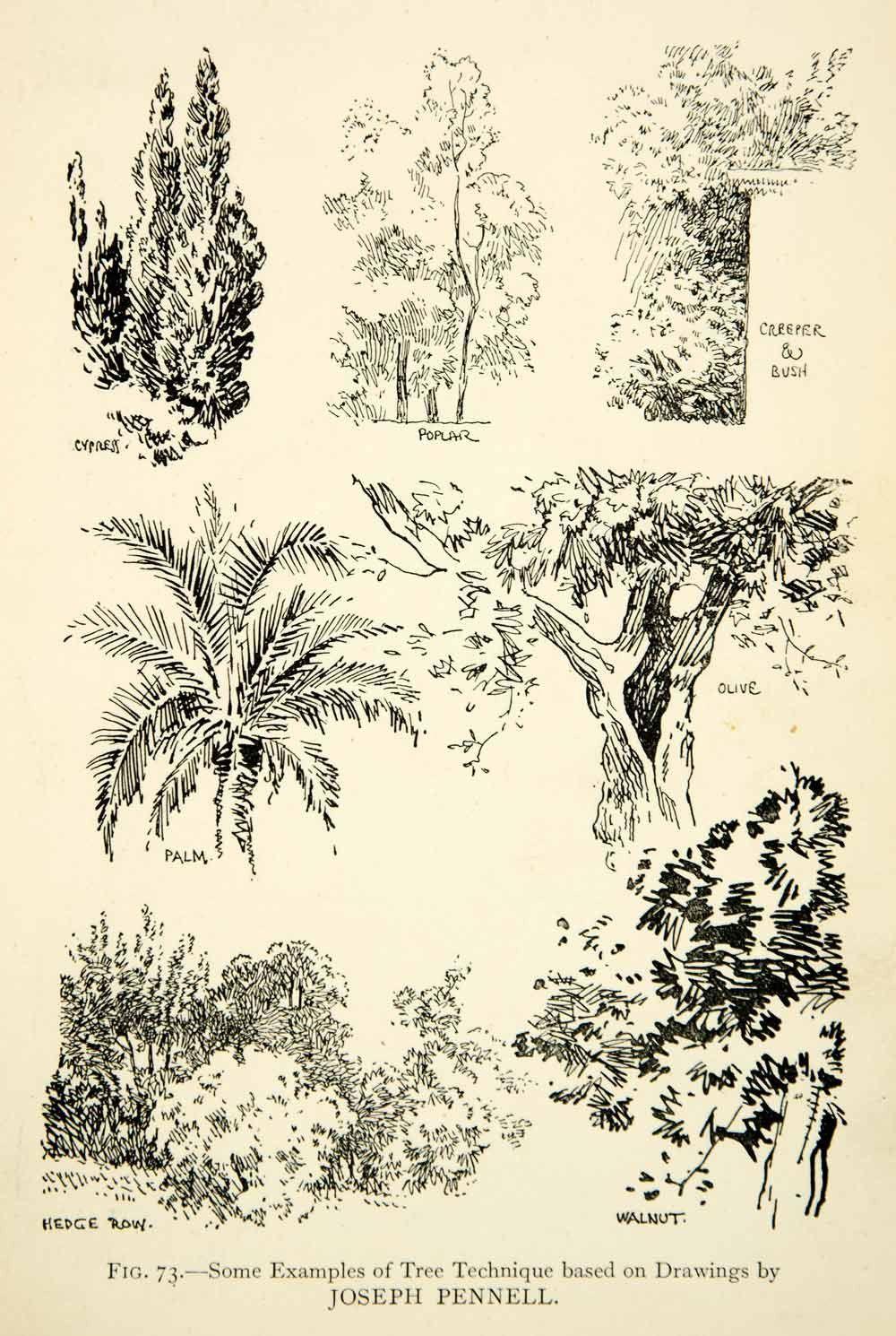 1927 Print Tree Technique Drawing Joseph Pennell Foliage Cypres Poplar XDH1