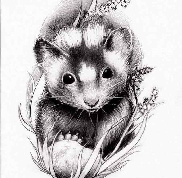 Skunk drawing | Tattoos! | Pinterest