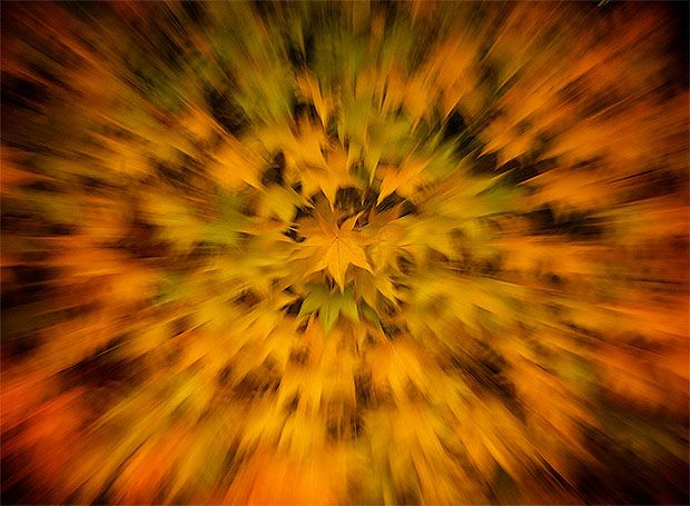 ZOOM BURST: How to Take Stunning Zoom Burst Photos  Zoom blur photo of autumn leaves